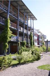 沿钢结构生长的爬藤植物