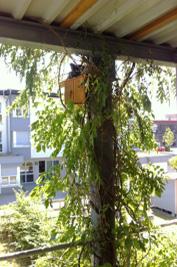 """在""""生态木屋""""筑巢的鸟儿"""